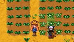 星露谷物语种地技巧 要先做稻草人